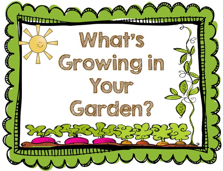 17 Best images about School GARDENS Rock on Pinterest.