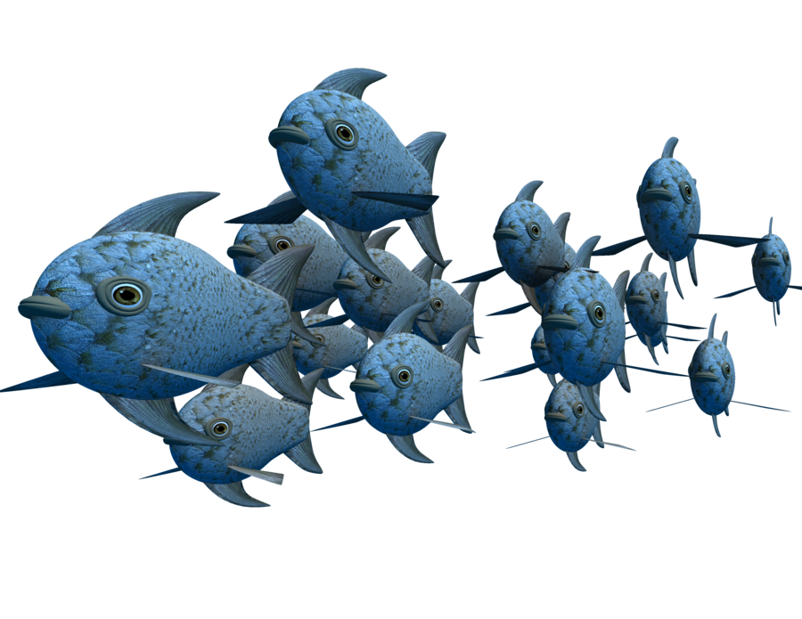 Download School of Fish PNG Photos.