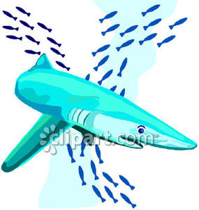 Great White Shark and a School of Fish Royalty Free Clipart Picture.