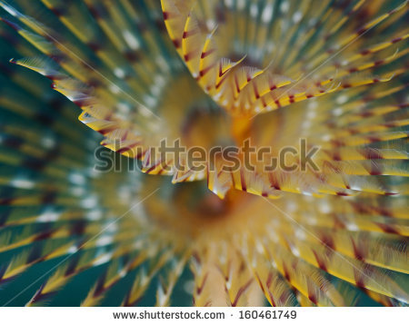 Macro Underwater Stock Photos, Royalty.
