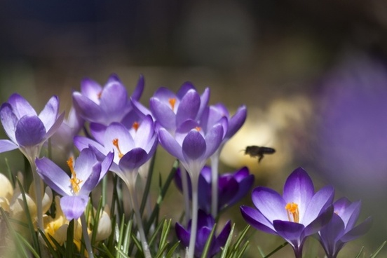 Spring pictures free stock photos download (4,549 Free stock.