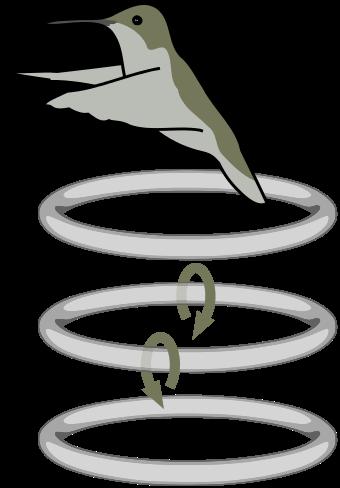 Schwirrflug.