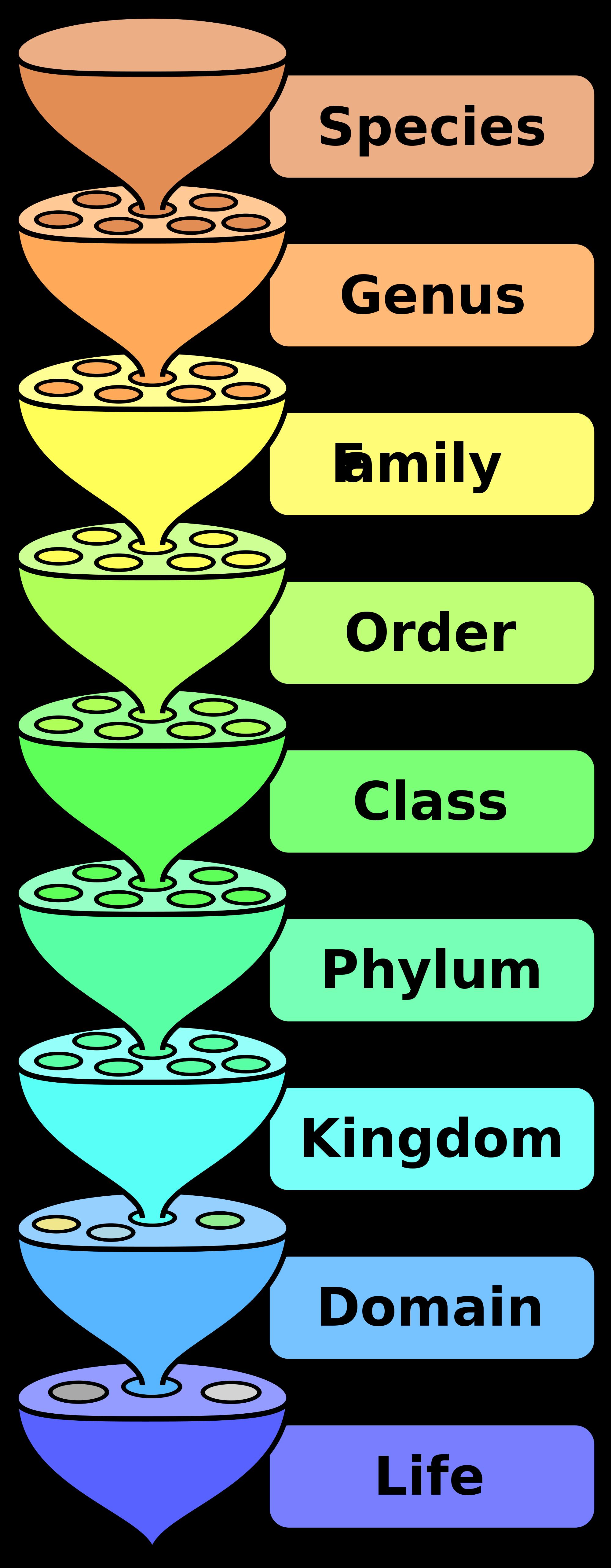 File:Biological classification L Pengo.svg.
