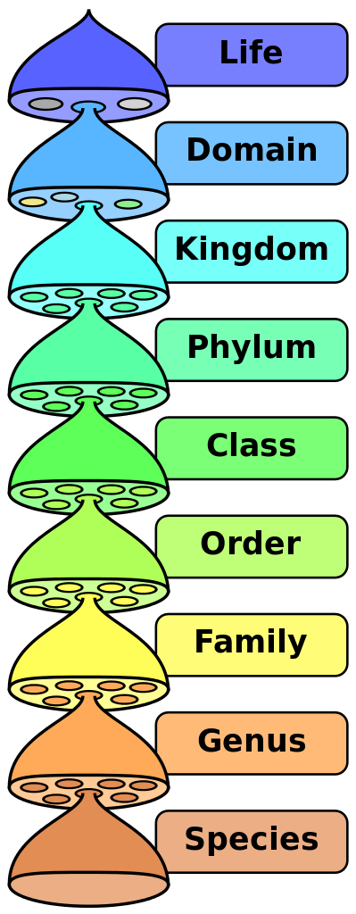Taxonomic rank.
