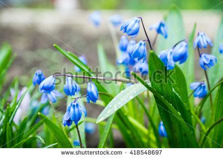 Siberian Garden Stock Photos, Royalty.