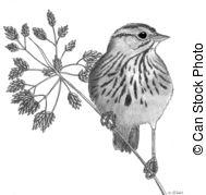 Scirpus Illustrations and Clip Art. 3 Scirpus royalty free.