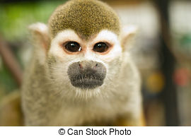 Stock Photography of Squirrel Monkey;a Common Squirrel Monkey.