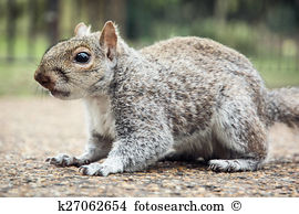 Sciuromorpha Stock Photos and Images. 140 sciuromorpha pictures.