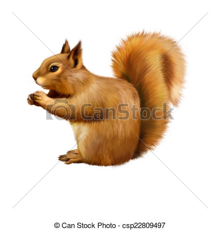 Stock Illustration of Red Squirrel, Sciurus Vulgaris, sitting.