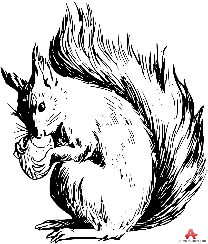 Animals Clipart of sciurus.