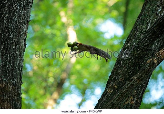Squirrel Nut Stock Photos & Squirrel Nut Stock Images.