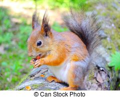 Stock Images of A very cute Japanese Brown Squirrel (Sciurus lis.