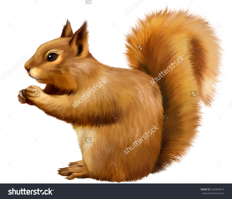 Red Squirrel Sciurus Vulgaris Eating Side Stock Vector 204964819.