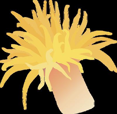 Tubastrea spp. 2 (Sun Coral).