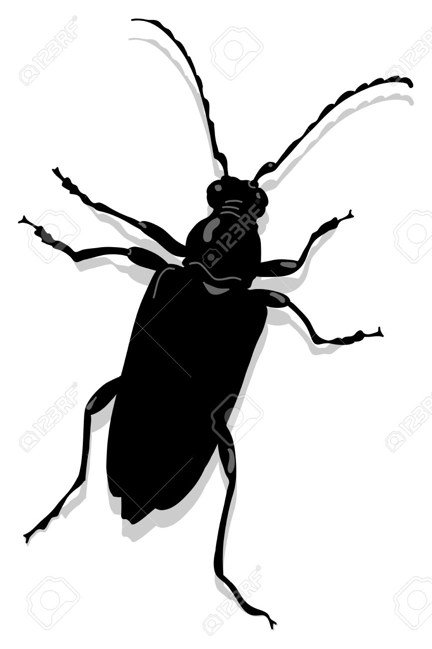 Cerambyx Scopolii Or Capricorn Beet Royalty Free Cliparts, Vectors.