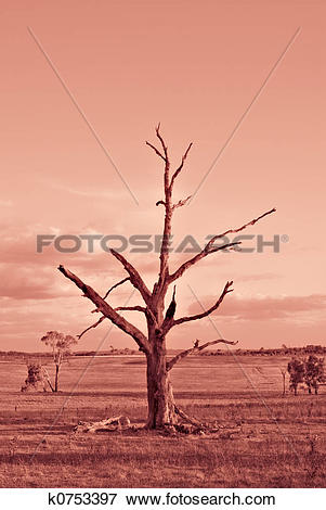 Picture of scorched earth k0753397.