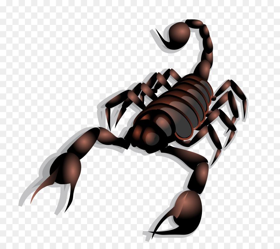 scorpion clipart Scorpion Clip art clipart.