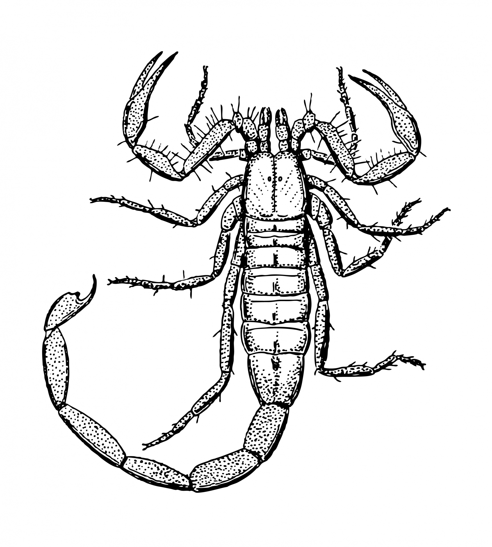 Scorpion,clipart,clip art,art,illustration.
