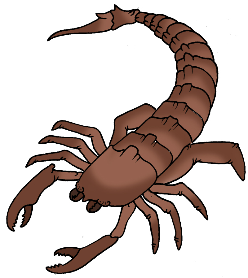 Free Scorpion Cliparts, Download Free Clip Art, Free Clip.