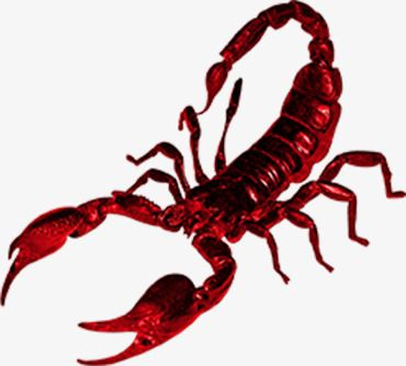 Red Scorpion, Poison, Pests, Scorpion Herbs PNG Transparent.