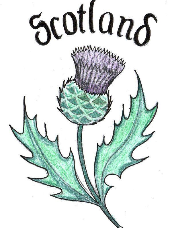Scottish Thistle Clipart Vector, Clipart, PSD.