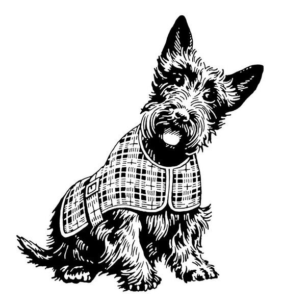 17 Best images about Scottie Dogs: Clip Art. Graphics, Line.