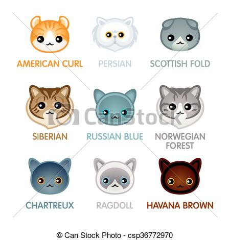 Scottish fold Vector Clip Art Illustrations. 76 Scottish fold.