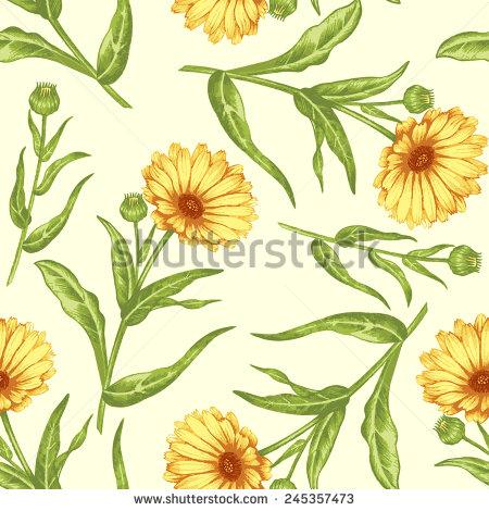 Marigold Marigold Flowers Stock Images, Royalty.