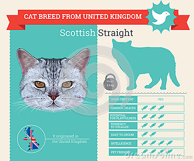 Scottish Straight Stock Illustrations.