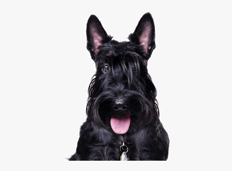 Clip Art Black Terrier Mix.