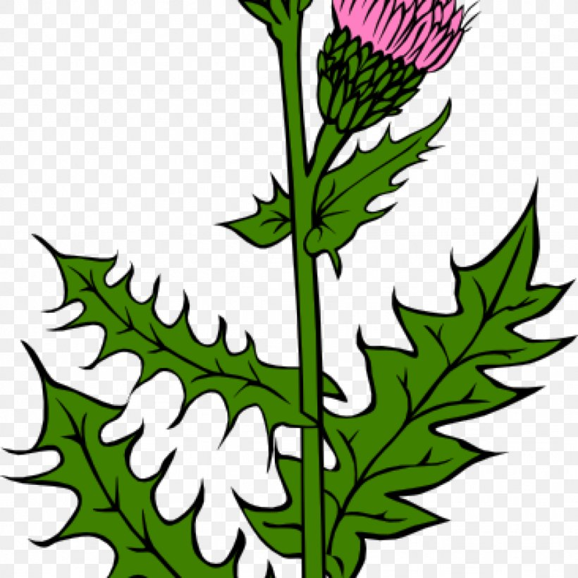 Flag Of Scotland Thistle Clip Art Vector Graphics, PNG.