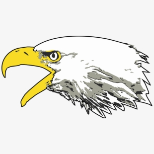 Eagle Bald Eagle Screaming Eagle Usa America Bird.