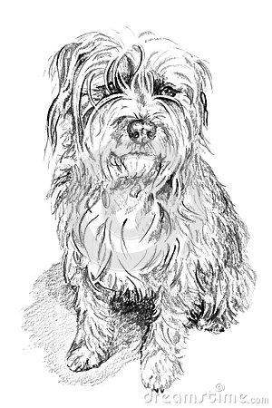 Scruffy Dog Stock Illustration.