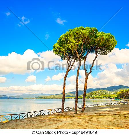 Stock Photo of Pine tree group on the beach and sea bay background.