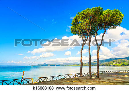 Pictures of Pine tree group on the beach and sea bay background.