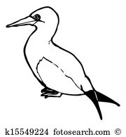 Sea bird Clipart and Stock Illustrations. 2,465 sea bird vector.