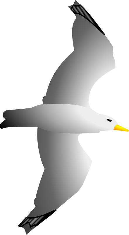 Free to Use & Public Domain Sea Gull Clip Art.