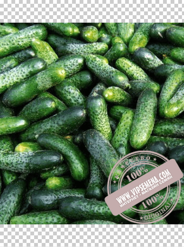 Seed Cucumber Price Rijk Zwaan Artikel, cucumber PNG clipart.