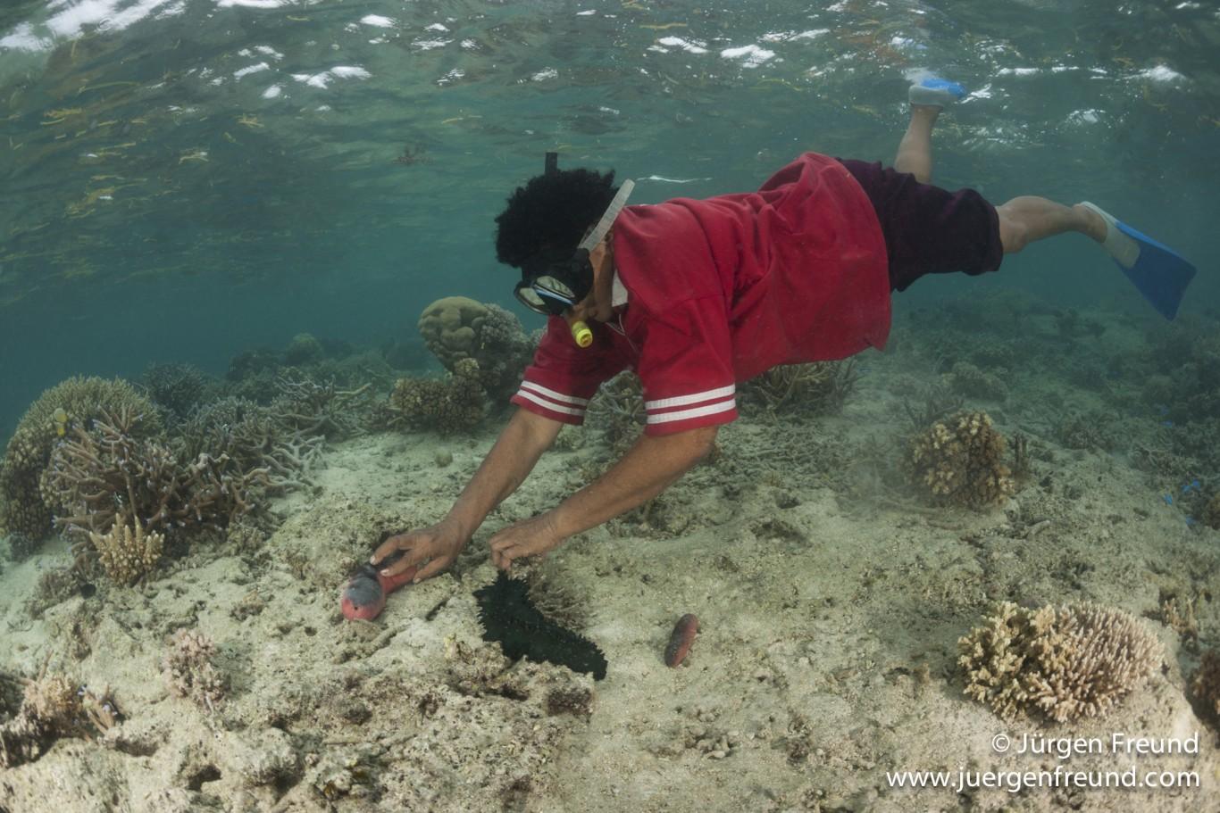 Sea Cucumbers are in sharp decline — Coconet.