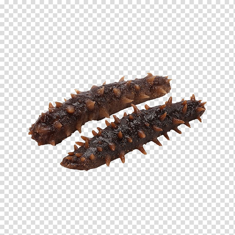 Sea cucumber as food, Two sea cucumber transparent.