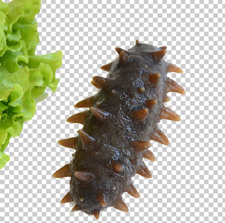 Sea Cucumber As Food Seafood PNG, Clipart, Abalone, Cucumber.