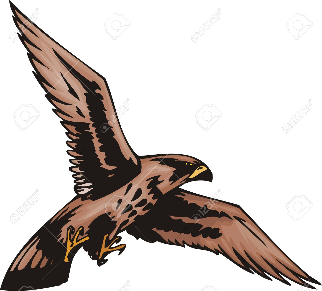 Young Sea Eagle With Brown Plumage. Predatory Birds. Illustration.
