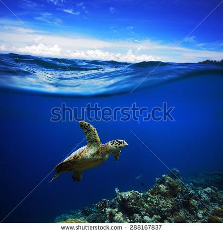 Half Animal Stockfoto's, rechtenvrije afbeeldingen en vectoren.