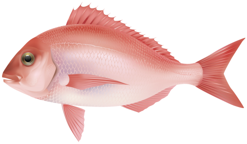 Red Sea Fish PNG Clipart Image.