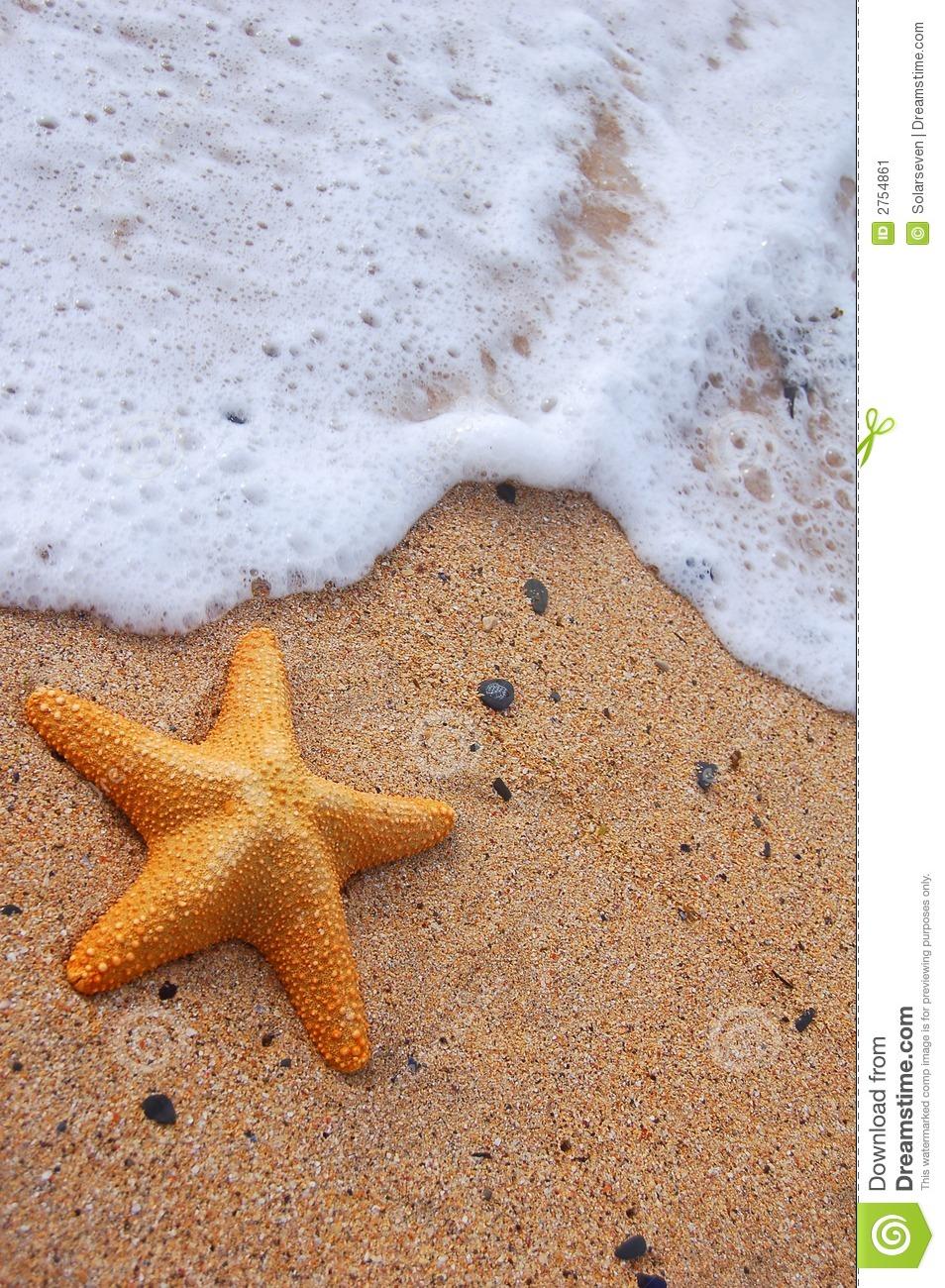Starfish And Sea Foam Stock Image.