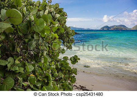 Pictures of Sea Grape Leaves with Caribbean in the Background.