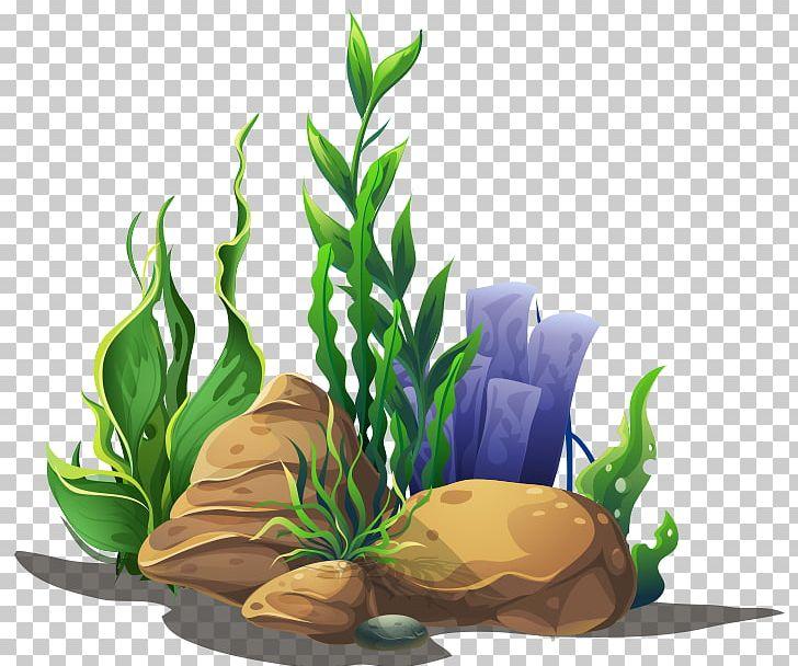 Seagrass Algae Aquatic Plants PNG, Clipart, Algae, Aquarium.