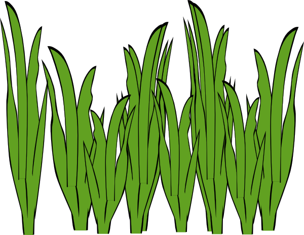 Seagrass Clip Art at Clker.com.