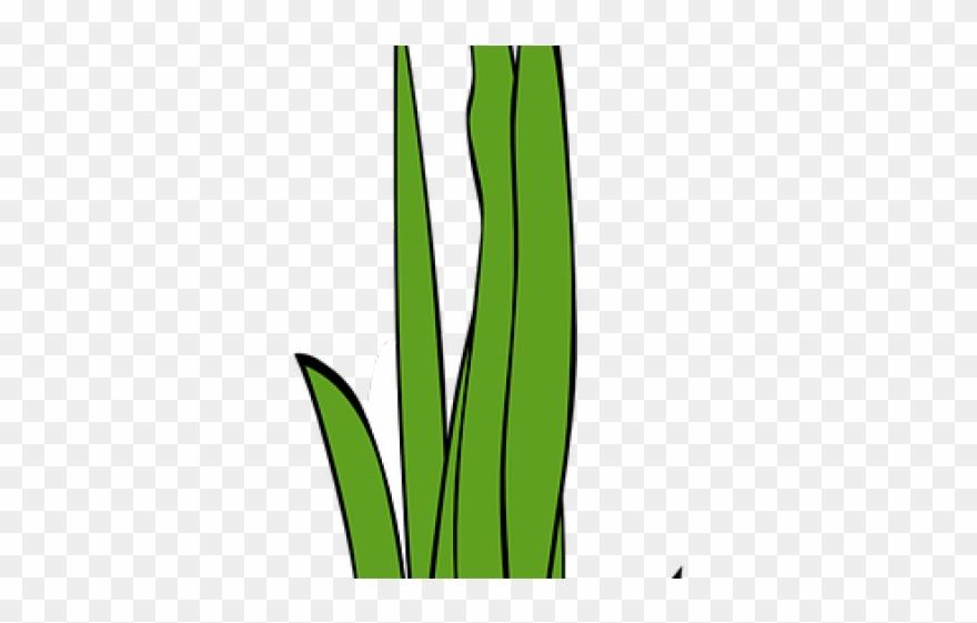 Sea Grass Clipart Blade Grass.