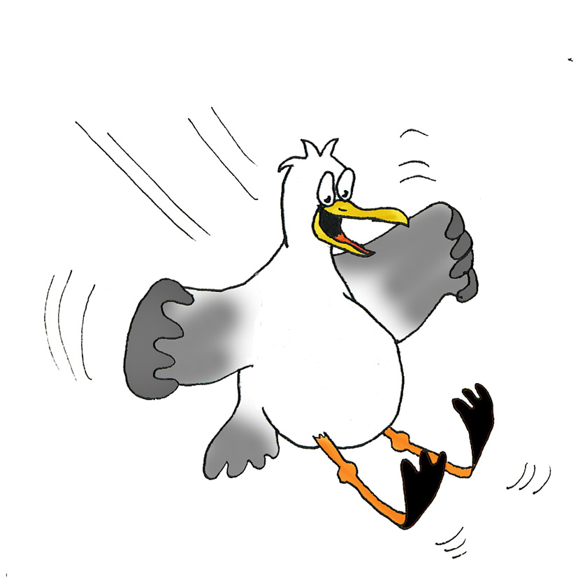 Seagull clipart free.